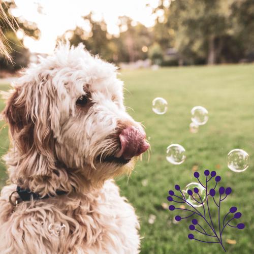 Perro mirando burbujas de jabón